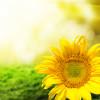 20 Zitate für ein besseres Leben